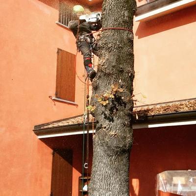 abbattimenti in tree climbing