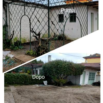 Giardinaggio e pulizia pareti ,siepi ,viali , giardini condominiali, pulizia palme ,sfalci ecc
