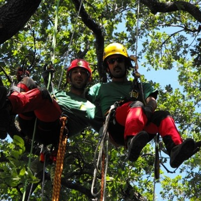 MR GREEN Tree Climbing