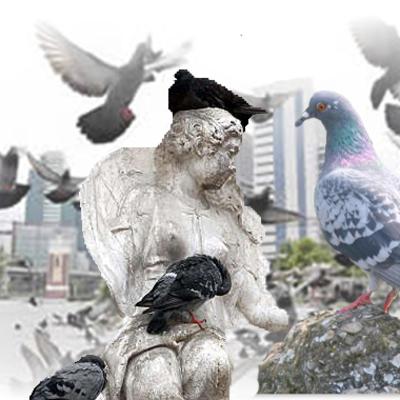 Risolvere il problema dei piccioni si può
