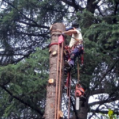 taglio alberi abbattimento alberi a roma e provincia