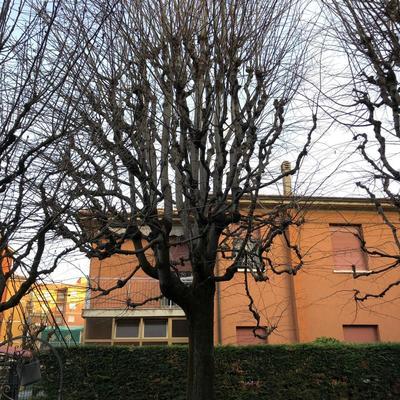 Giardino Privato a Bologna