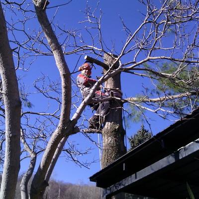 Abbattimento alberi pericolanti in tree climbing