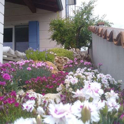 piccolo giardino sempre fiorito