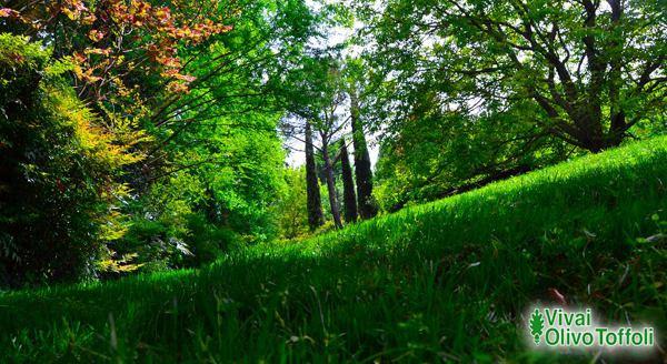 foto garden di vivai olivo toffoli di aldo toffoli e c. Black Bedroom Furniture Sets. Home Design Ideas