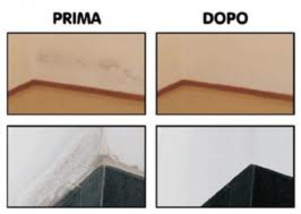 Foto muffa de nettuno color 171249 habitissimo - Eliminare condensa dalle finestre ...