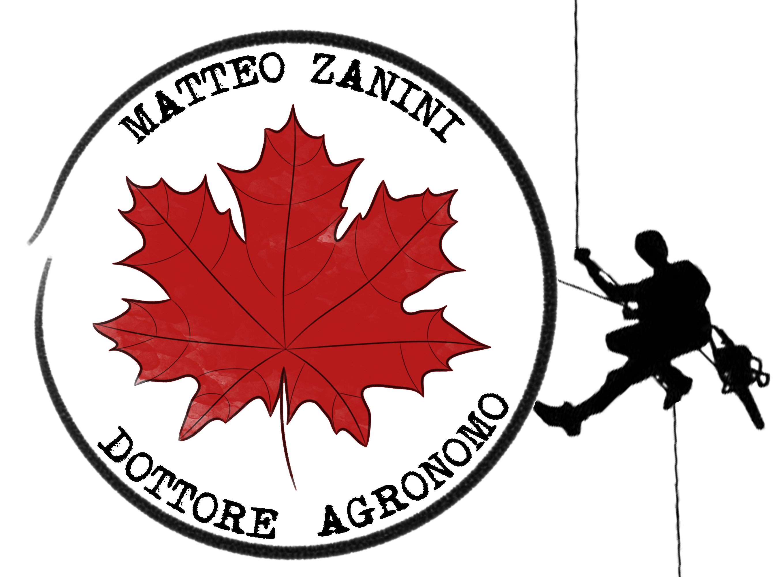 Dottore Agronomo Matteo Zanini - Tree Climbing