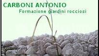 Carboni Antonio