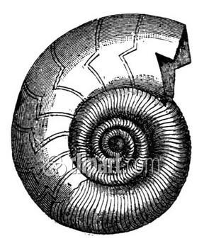 Cinotti Marco Geologo