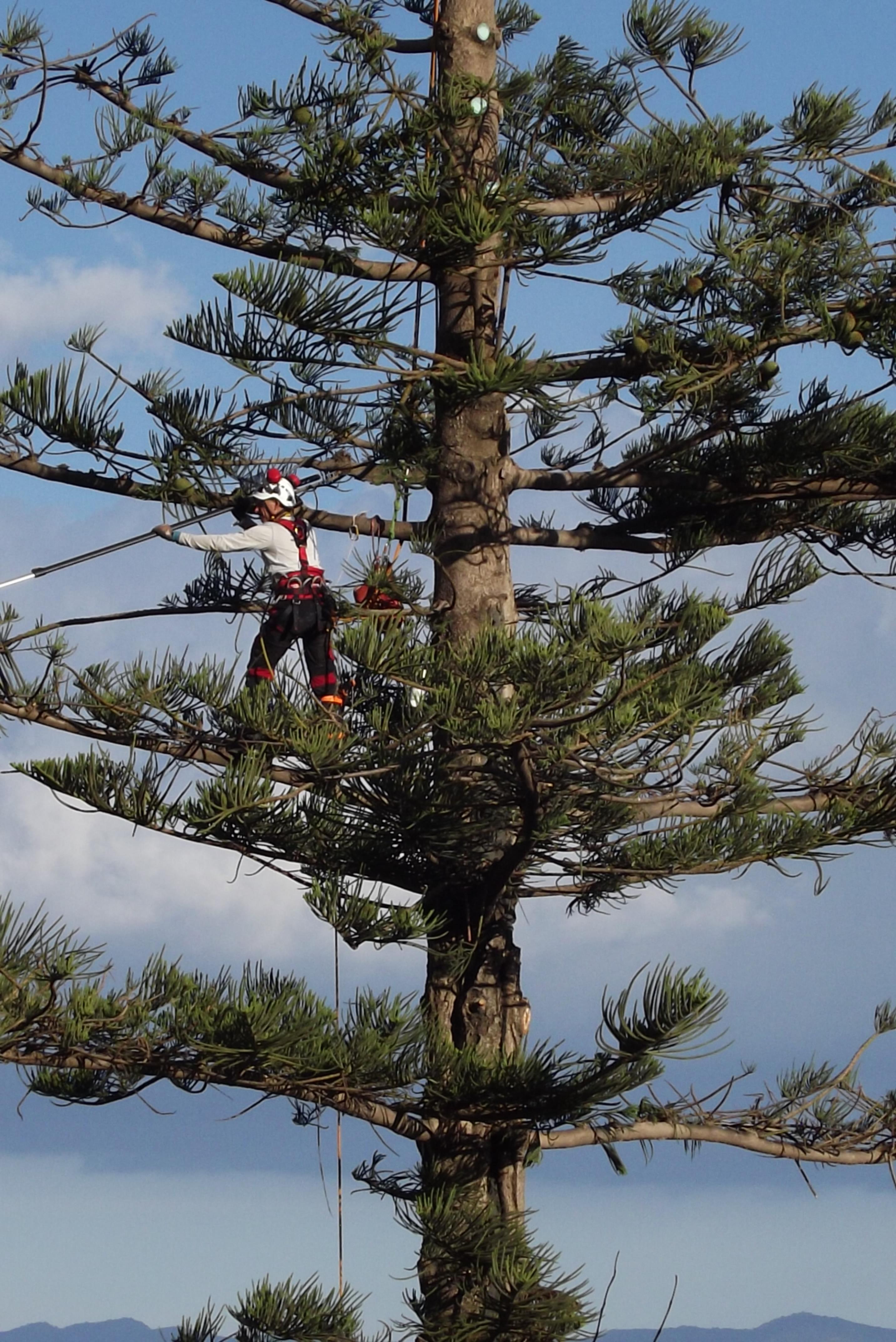 Tree Climbing E Giardini Di Roberto Frau