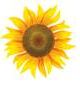 Sunflower Soc.coop.sociale