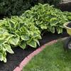 Manuntenzione giardino