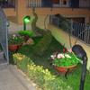 Recintare giardino e piantare siepe