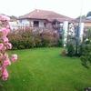 Tagliare piante giardino privato