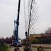 Spostare albero di venti metri