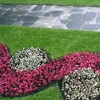 Richiesta manutenzione giardino