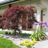 Piastrellare giardino e creare aiuola