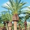 Rimozione/taglio palma 5 mt