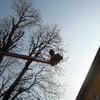 Sdradicare alberi