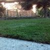 Fornire Prato In Zolle