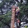 Tagliare alberi in giardino