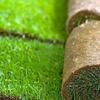 Rifare tappeto erboso in rotoli