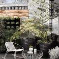 Arredare il giardino con piante