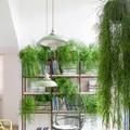 Casa con piante e verde greenery