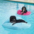complementi acquatici per cani