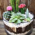 terrario di cactus