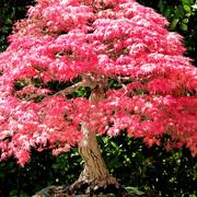 alberi giardino