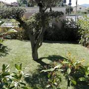 nuovo prato a rotoli e irrigazione a Montemurlo ( FI )
