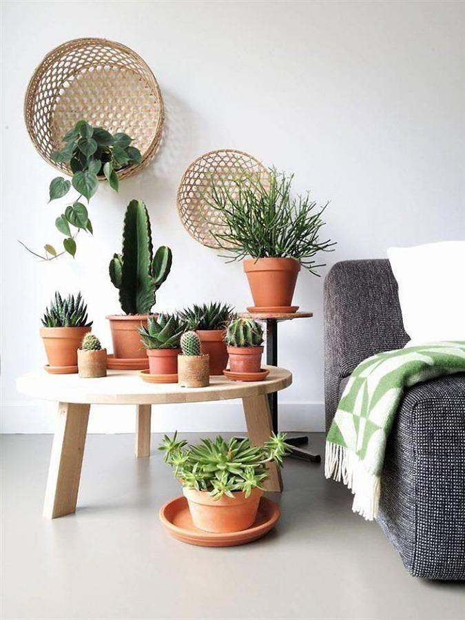 7 piante top per arredare la tua casa idee giardinieri for De laat interieur