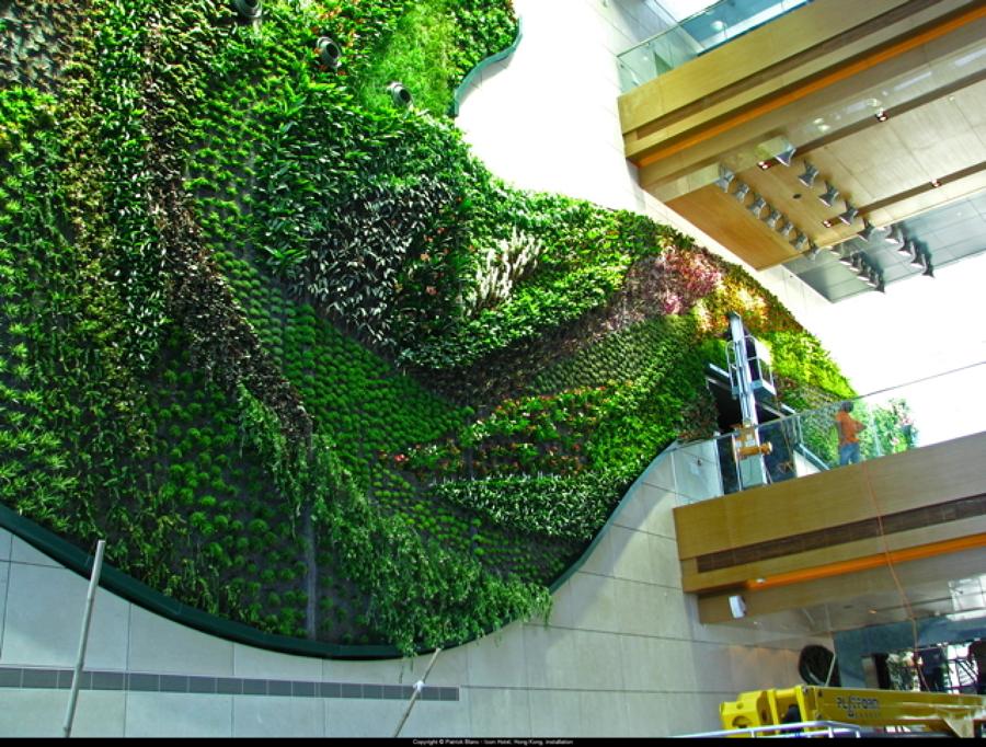 giardini idee pratiche manutenzione : Consigli Per la Manutenzione di Giardini Verticali Idee Interior ...