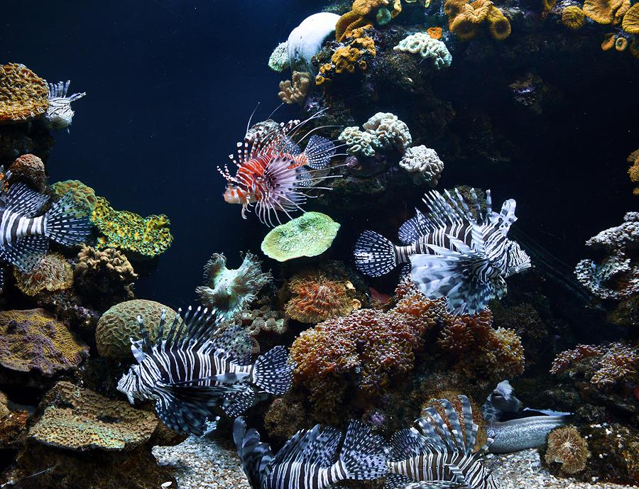 Sentiti come un pesce nell acqua con un acquario in casa for Acqua acquario
