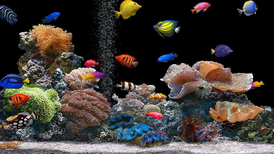 Sentiti come un pesce nell acqua con un acquario in casa - Acquario in casa ...