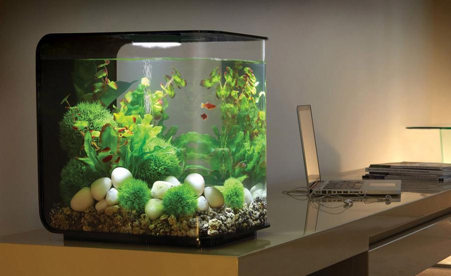 Sentiti come un pesce nell acqua con un acquario in casa for Pesci per acquario piccolo