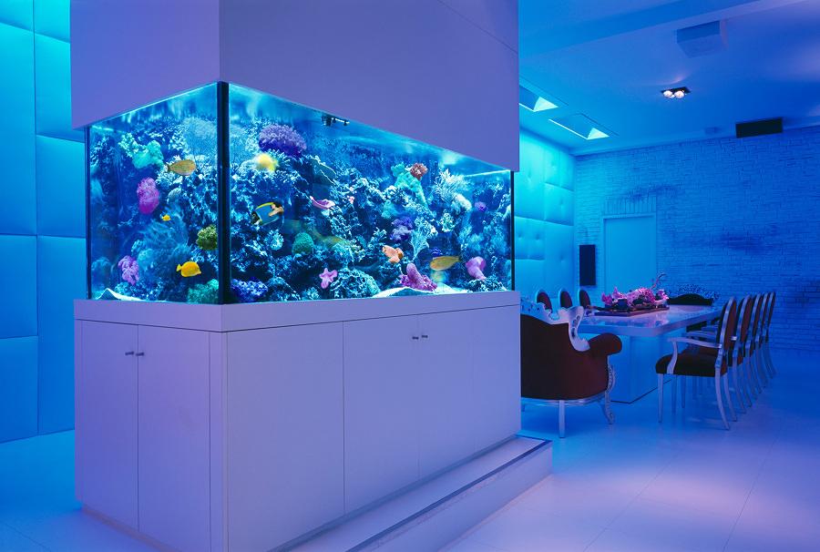 acquario  salone