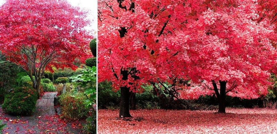 foto alberi decorativi di valeria del treste 321712