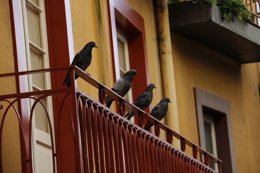 allontanare piccioni balcone