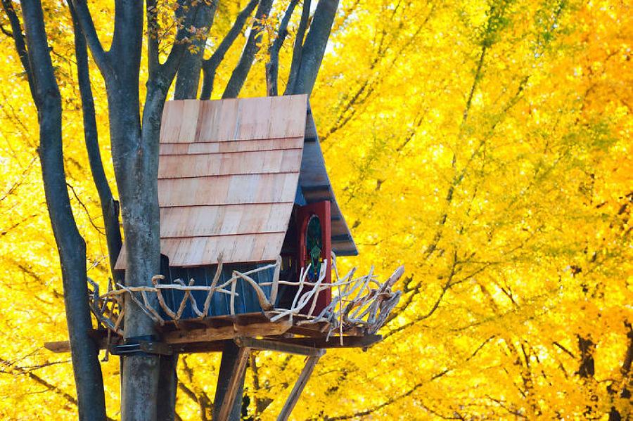 casa sull'albero di design