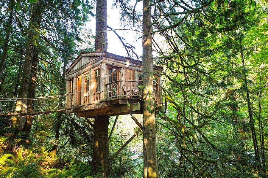 casa tra due alberi