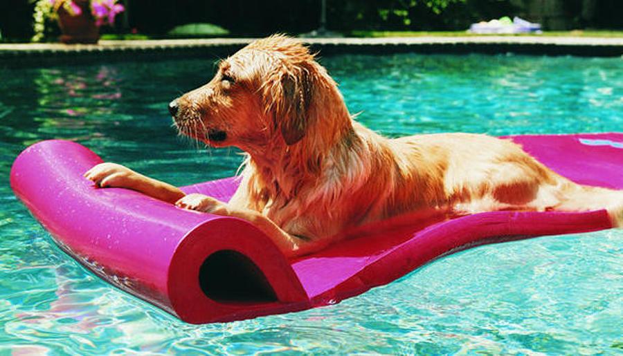 Materassini per cani materassini e giochi acquatici per - Materassini per piscina ...