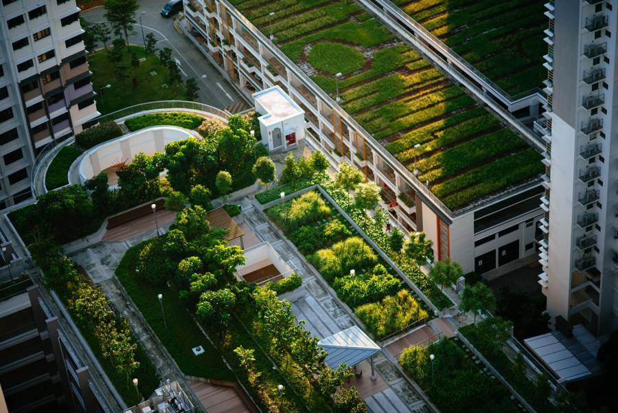 copertura verde edifici
