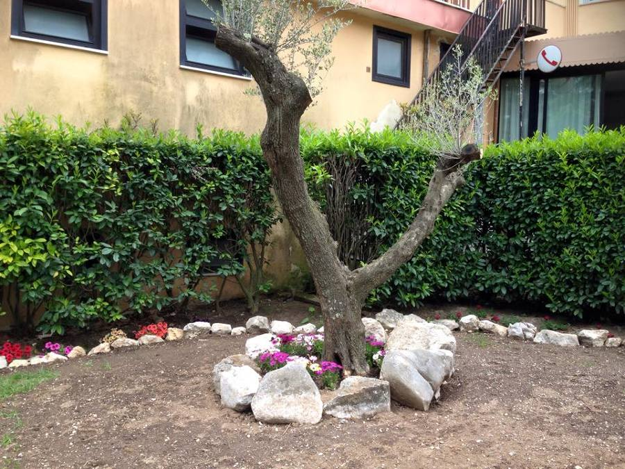 Aiuole in pietra fw52 regardsdefemmes - Alberi da interno ...