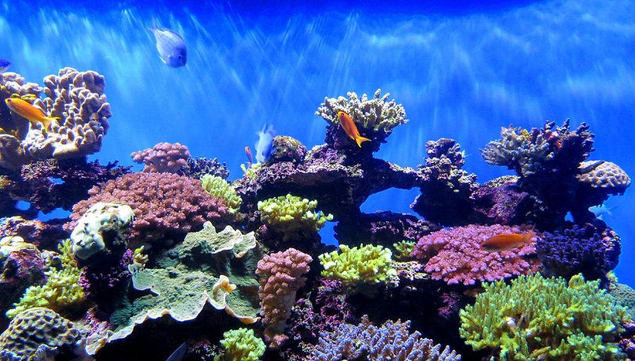 Foto ecosistema marino di valeria del treste 304265 for Acuarios para peces marinos