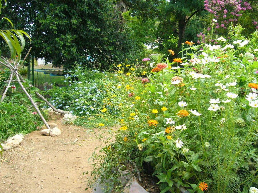 Progetta e crea il tuo giardino ecologico idee interior - Crea il tuo giardino ...