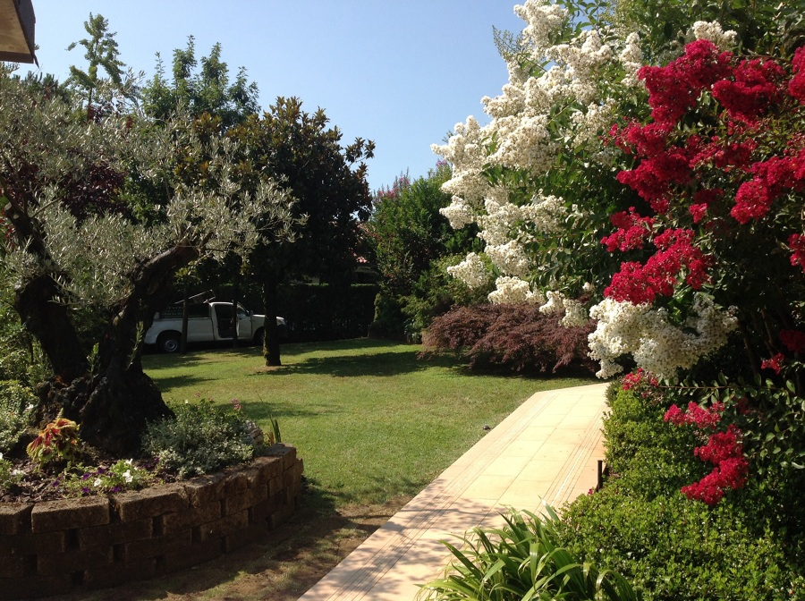 Foto giardino mediterraneo de idea verde di mauro - Progetto giardino mediterraneo ...