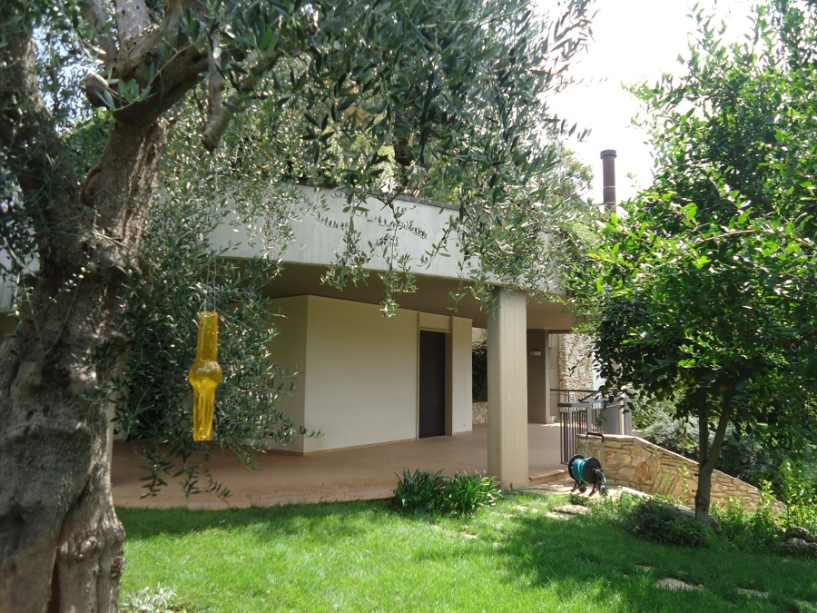 Realizzazione di villa bifamiliare sita in altamura idee - Giardino con ulivo ...