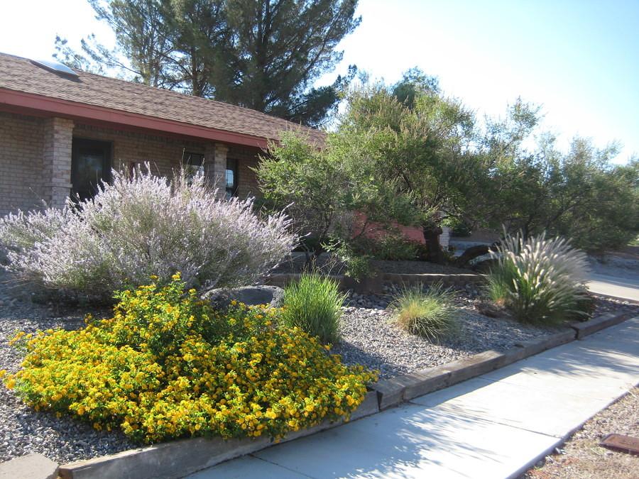 Top Xerogiardineria: Giardini senza una Goccia D'acqua In Più | Idee  NP67